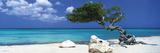 Tom Mackie - Divi Divi Tree Poster