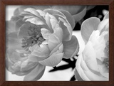 Delicate Blossom Posters by Nicole Katano