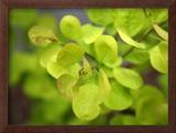 Fresh Bloom IV Prints by Nicole Katano