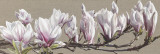 Magnolia Swathe Prints by Sarah Caswell