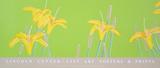 Day Lilies Serigrafi af Alex Katz