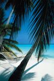 Hamac sur plage Affiches