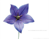 Bloom - Honey Photo