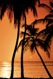 Tropical - Sunset Posters