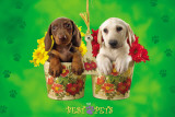 My Best Pets - Dogs In Flower Pots Affischer