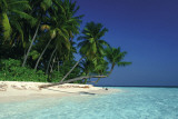 Isla tropical Pósters