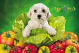 My Best Pets - Dog In Lettuce Pósters