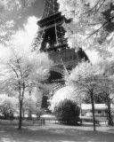 Paris - Eiffel Tower Photo