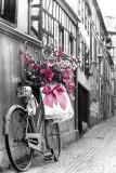 Růžové květiny Plakát