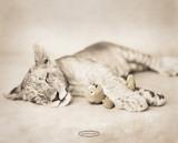 Rachael Hale - Arjuna and Teddy Posters