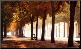 Champs-Elysees Mounted Print by Bo Brannhage
