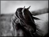 Fierce Grace Mounted Print by Tony Stromberg