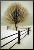 Solitude Mounted Print by David Winston