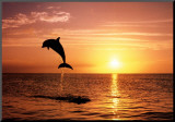 Goals: Dolphins Mounted Print by Craig Tuttle