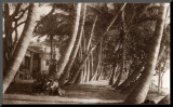 Coconut Lane, Waikiki, Hawaii, 1916 Mounted Print