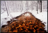 Autumn Passage Mounted Print by Jim Brandenburg