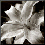 Pure Lily Mounted Print