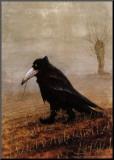 Cuervo Lámina montada en tabla por Rudi Hurzlmeier