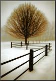 Eenzaamheid, geïsoleerde boom Kunst op hout van David Winston