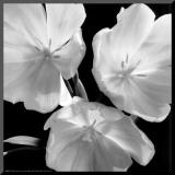 Tulipaner Opspændt tryk af Darlene Shiels
