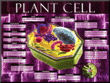 Plant Cell Mounted Print