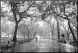 Poet's Walk, Central Park, New York City Mounted Print by Henri Silberman