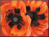 Oriental Poppies, 1928 Opspændt tryk af Georgia O'Keeffe