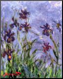 Irissen Kunstdruk geperst op hout van Claude Monet