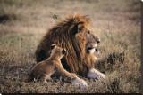 El padre sabe más Reproducción en lienzo de la lámina por Art Wolfe