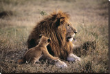 Father Knows Best Stretched Canvas Print by Art Wolfe