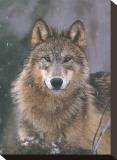 Stolz des Waldgebiets, Montana Bedruckte aufgespannte Leinwand von Art Wolfe