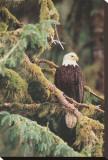 Einsamer Wächter, Alaska Leinwand von Art Wolfe