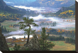 Pine with a View Stretched Canvas Print by Leslie Mueller