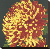 Chrysanthemum, no. 2 Stretched Canvas Print by Elizabeth Hellman