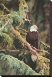 Sentinella silenziosa Alaska Stampa su tela di Art Wolfe