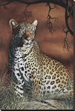 Sitting Leopard Stretched Canvas Print by Rajendra Singh