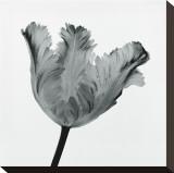 Parrot Tulip I Opspændt lærredstryk af Tom Artin