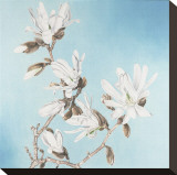 Magnolia Stretched Canvas Print by Elizabeth Hellman
