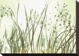 Watery Grasses III Stretched Canvas Print by Jenny Kraft