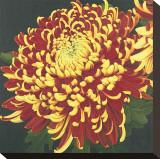 Chrysanthemum, no. 1 Stretched Canvas Print by Elizabeth Hellman
