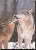 Nördliches Zwischenspiel, Kanada Leinwand von Art Wolfe