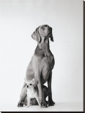 Max and Roxie Stretched Canvas Print by Amanda Jones