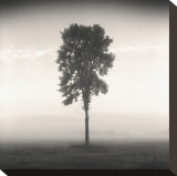 Tree, Study, no. 1 Stretched Canvas Print by Andrew Ren