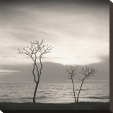 Tree, Study, no. 4 Stretched Canvas Print by Andrew Ren