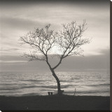 Tree, Study, no. 5 Leinwand von Andrew Ren