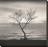 Tree, Study, no. 5 Stretched Canvas Print by Andrew Ren