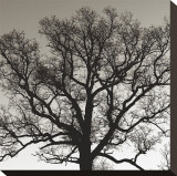 Early Winter Tree Stretched Canvas Print by Erin Clark