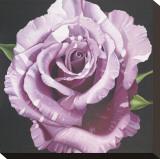 Rose Stretched Canvas Print by Elizabeth Hellman