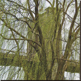 Veiled Brooklyn Bridge (detail) Stretched Canvas Print by Erin Clark