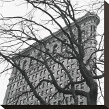 Flatiron with Tree (detail) Stretched Canvas Print by Erin Clark